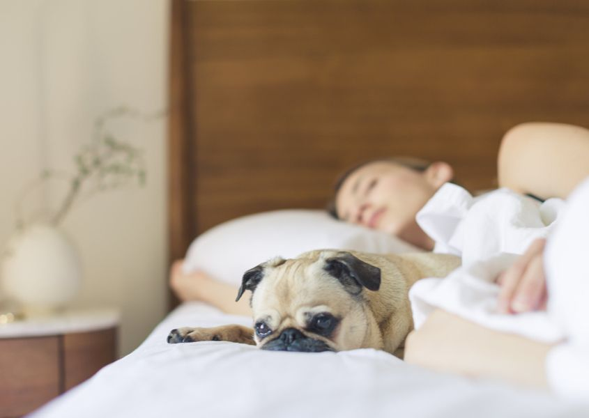 What exactly is sleep? And why do we need it?