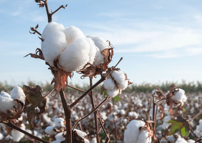 What makes SUPIMA® cotton so wonderful?